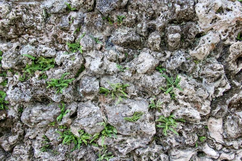 Naturlig stenvägg med rengöringsduk för spindel` s på stenar och växter som växer mellan stenar arkivbilder