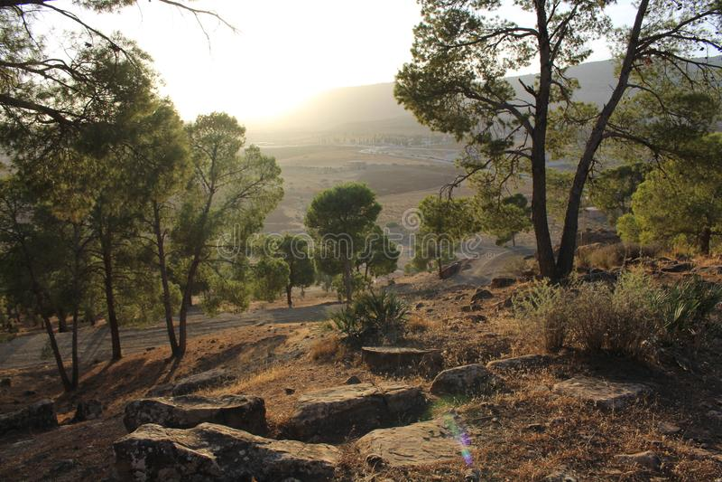 Naturlig Sunsit skog royaltyfria bilder