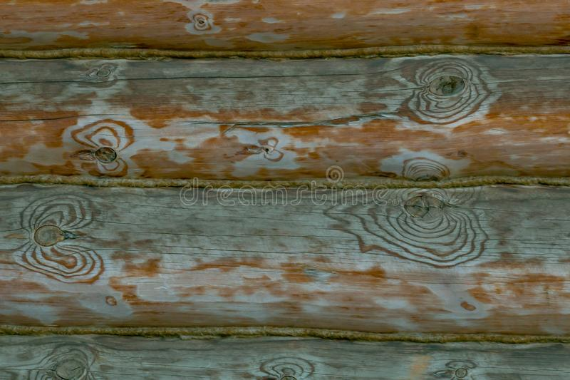 Naturlig textur av ädelträ; Träbakgrund med modellen av gnarl arkivfoto