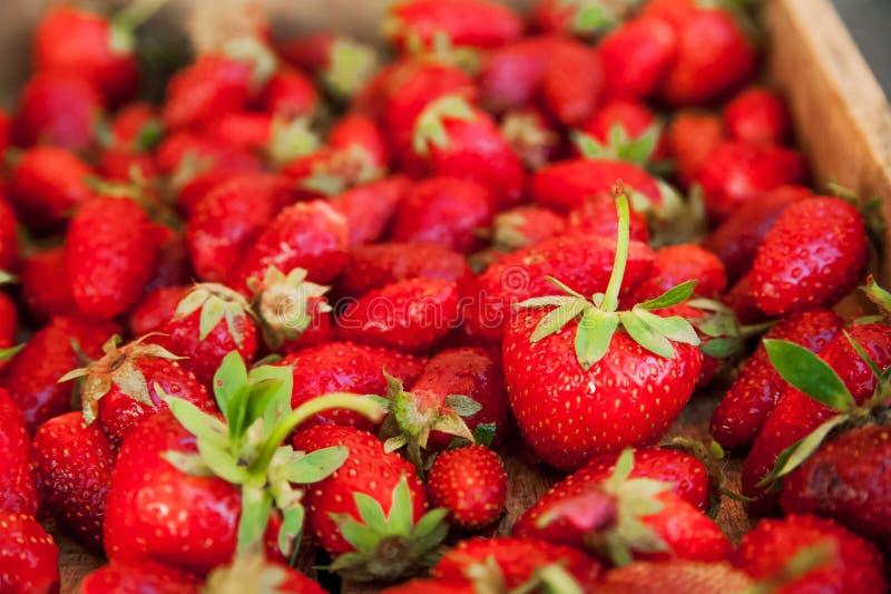 Naturlig textur av mogna jordgubbar Baner av jordgubbar i ett träasknärbild- och kopieringsutrymme royaltyfri bild