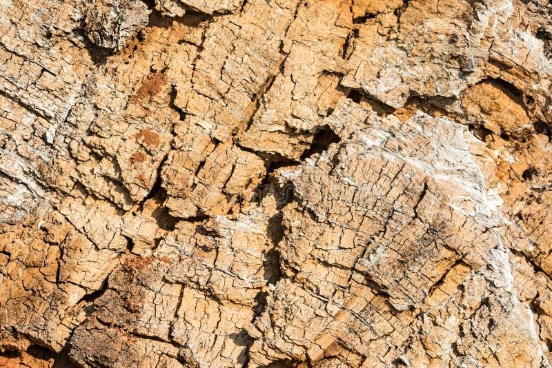 naturlig textur Gammalt trä av det avverkade trädet arkivbild