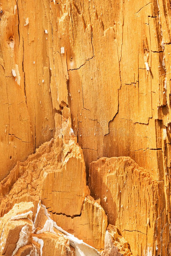 naturlig textur heartwood royaltyfri fotografi