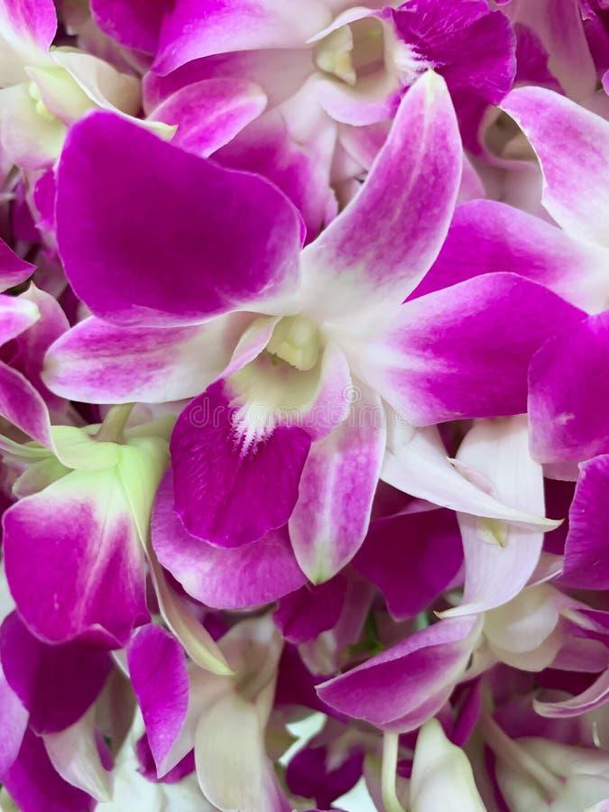 Naturlig thailändsk orkidétexturbakgrund fotografering för bildbyråer