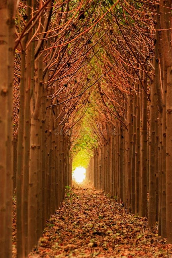 Naturlig trädtunnel arkivbild