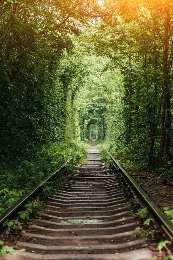 Naturlig tunnel av förälskelse som dyker upp från träden arkivbilder