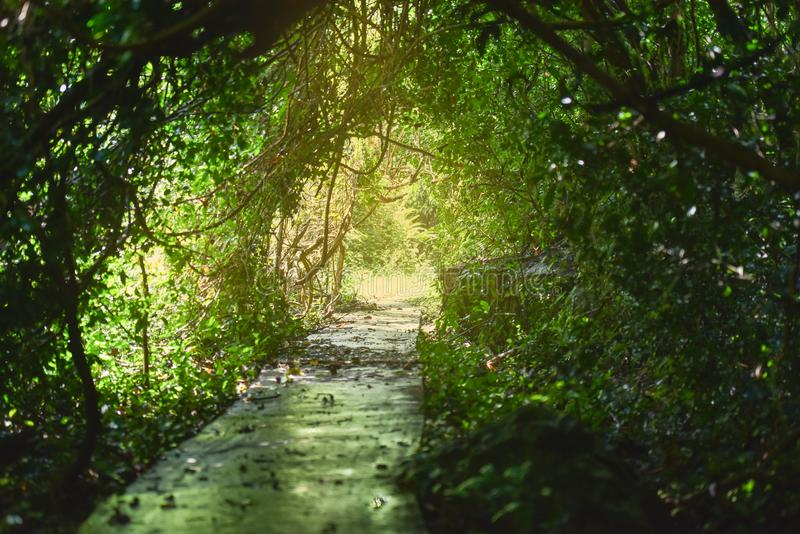 Naturlig tunnel i tropisk djungelskog arkivfoton
