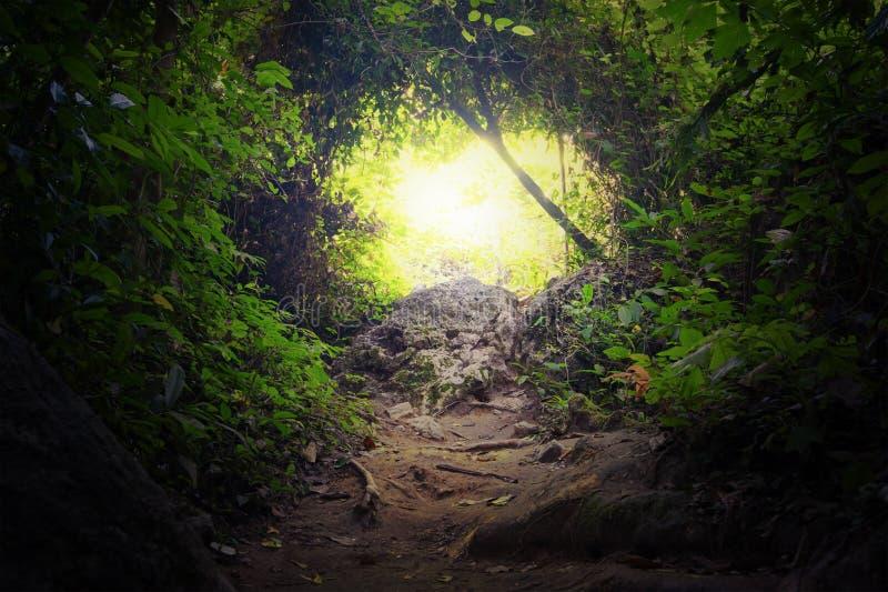 Naturlig tunnel i tropisk djungelskog royaltyfri bild