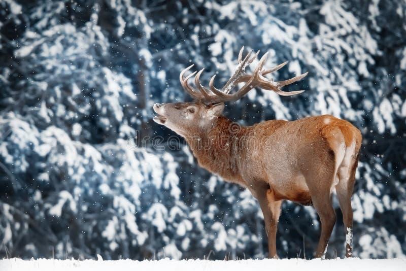 Naturlig vinterbakgrund Vinterskog i snön royaltyfri bild