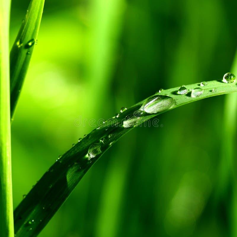 naturlig waterdrop royaltyfri foto