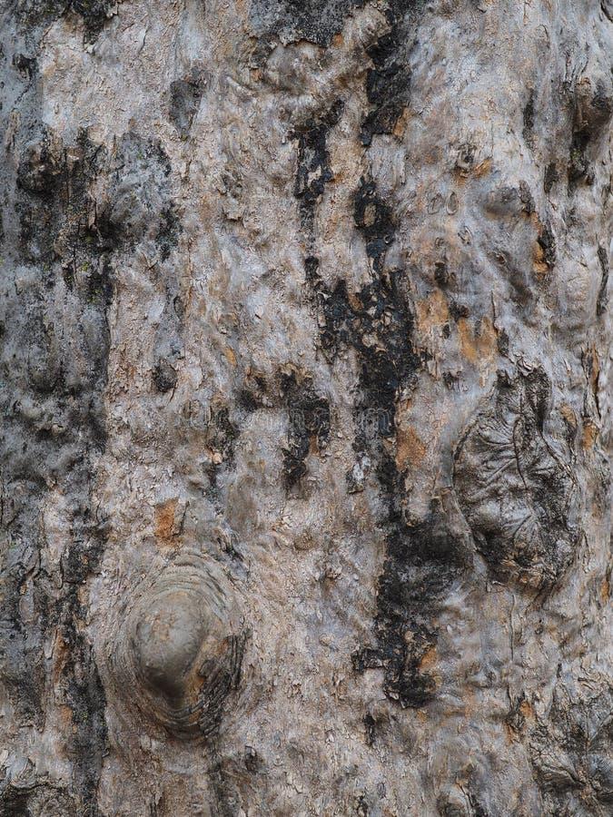 Naturliga abstrakt begreppmodeller på skället av en gammal trädstam arkivbilder