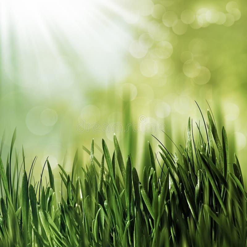 Naturliga bakgrunder för skönhet med grönt gräs arkivfoto