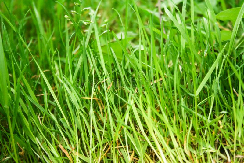 Naturliga bakgrunder med grönt gräs royaltyfri fotografi