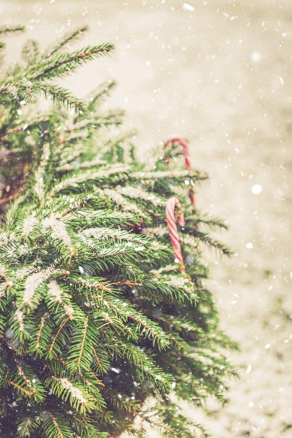 Naturliga fruncher för granträd som täckas med snö, julbegrepp royaltyfri foto