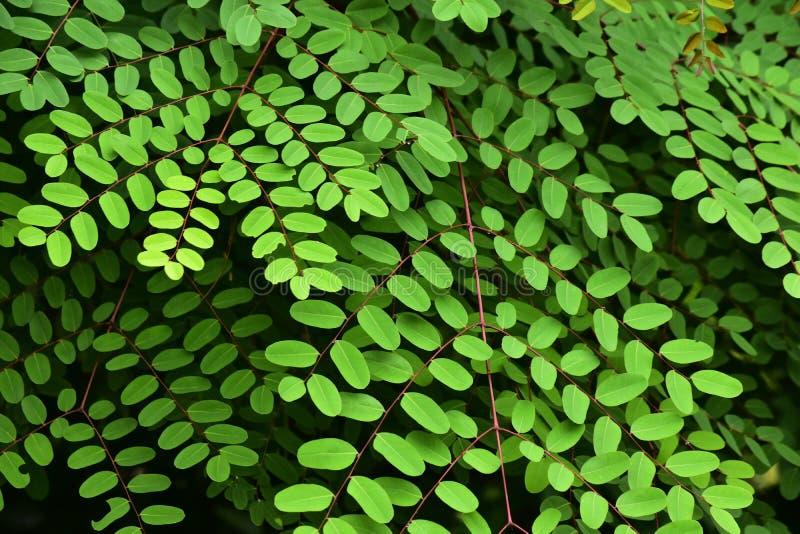 Naturliga gröna sidor i blommaträdgården som är härlig och förnyar på en avslappnande dag arkivfoton