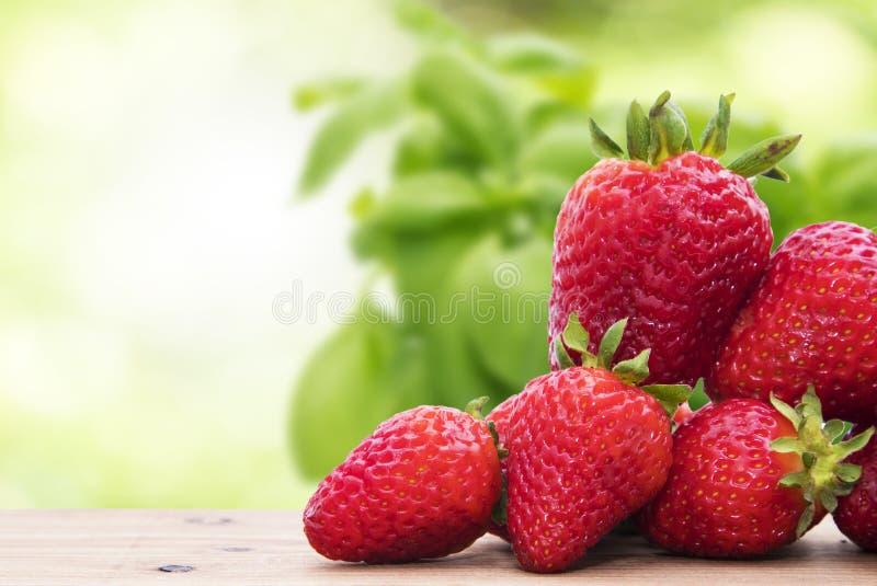 Naturliga jordgubbar med naturlig gräsplan arkivfoto
