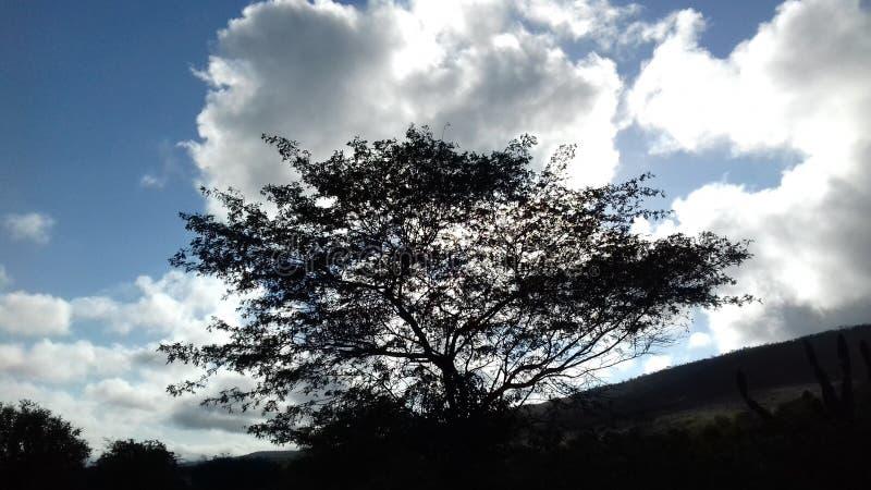 Naturliga landskap royaltyfri bild
