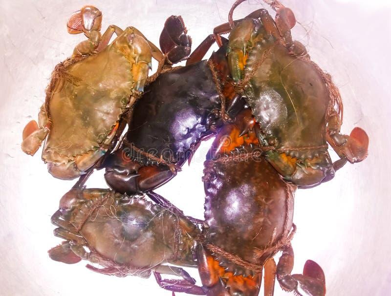 Naturliga nya krabbor royaltyfri bild