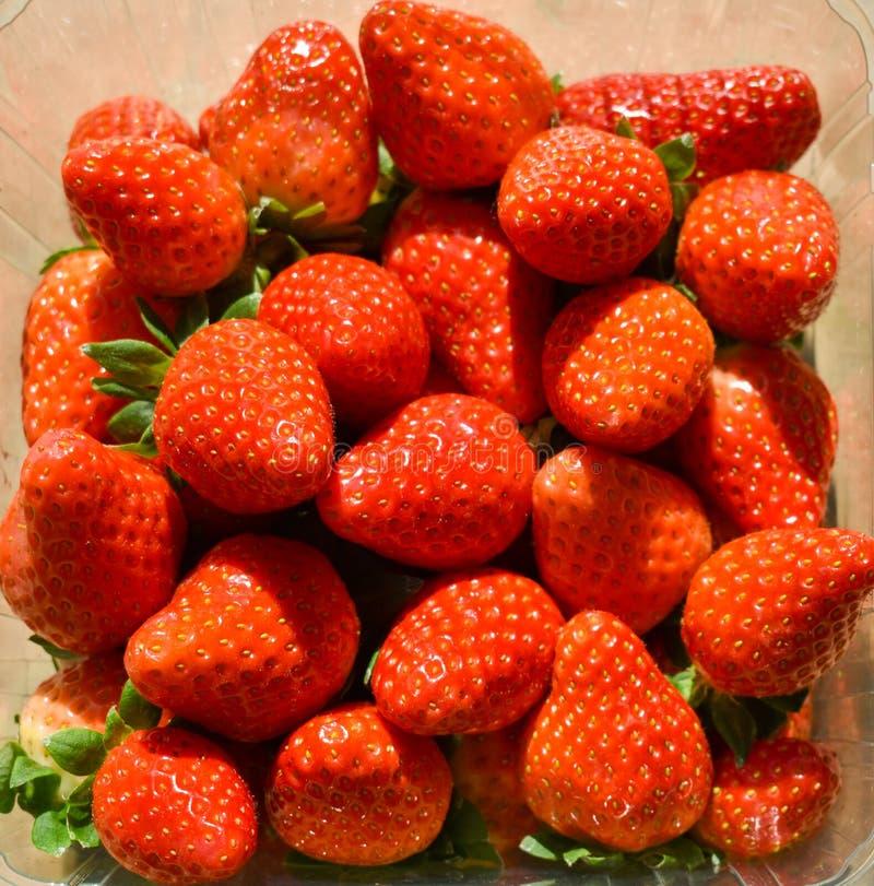 naturliga och nya röda jordgubbar på en tabell som är klar att äta royaltyfri foto
