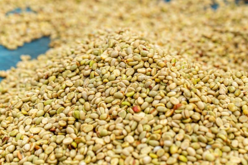 Naturliga organiska gröna kaffebönor royaltyfri foto
