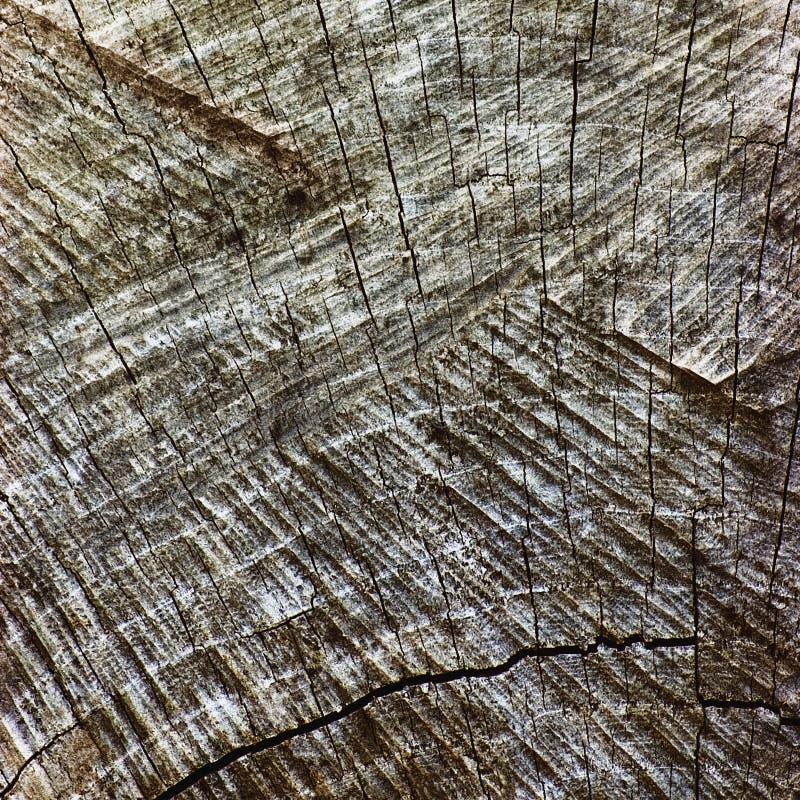Naturliga red ut Grey Tree Stump Cut Texture, stor detaljerad gammal åldrig Gray Lumber Background Horizontal Macro Closeup, mörk arkivbilder