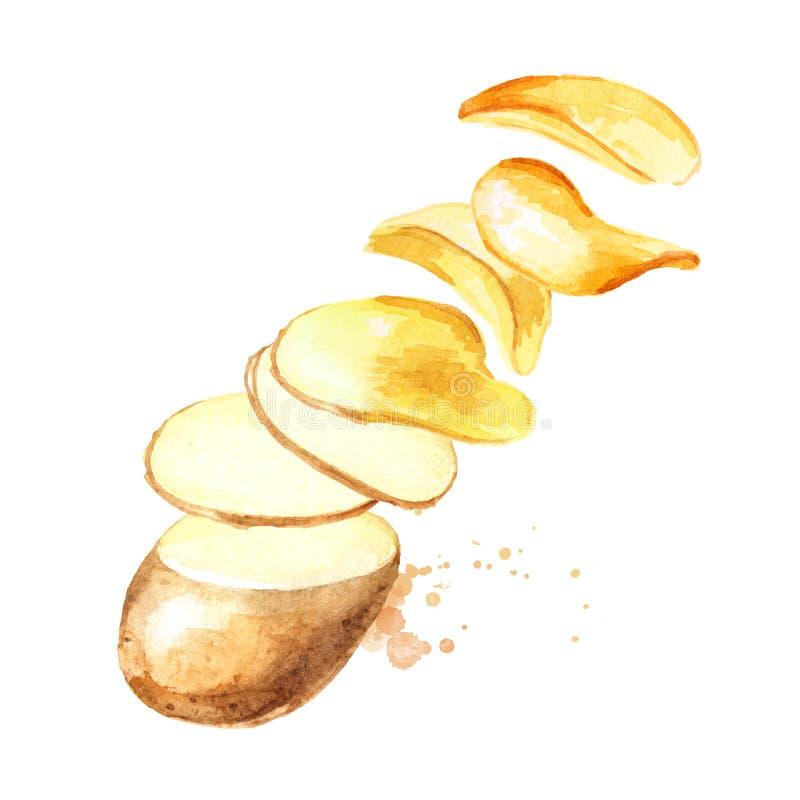 Naturliga skivor f?r r? potatis som v?nder in i chiper Dragen illustration f?r vattenf?rg som hand isoleras p? vit bakgrund vektor illustrationer