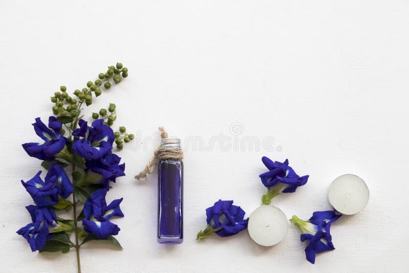 Naturliga växt- oljor från blommor för fjärilsärta royaltyfri foto