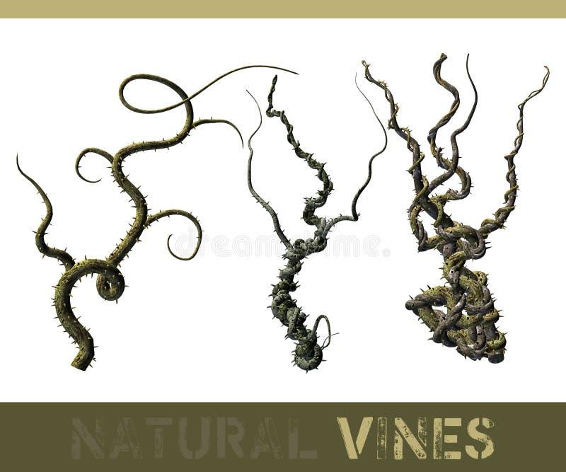 naturliga vines stock illustrationer