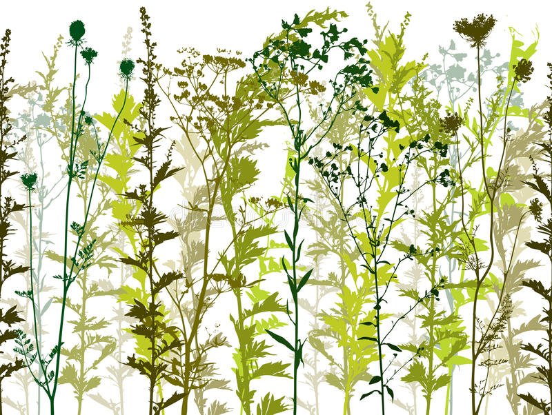 Naturliga wild växter. vektor illustrationer