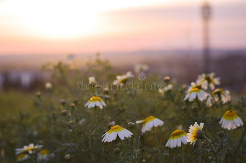 Naturligt blomstrade blommor royaltyfri bild
