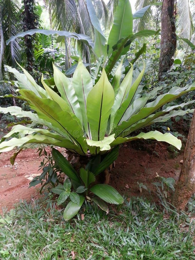 Naturligt en härlig diskussion på växter på träden i miljön royaltyfri foto