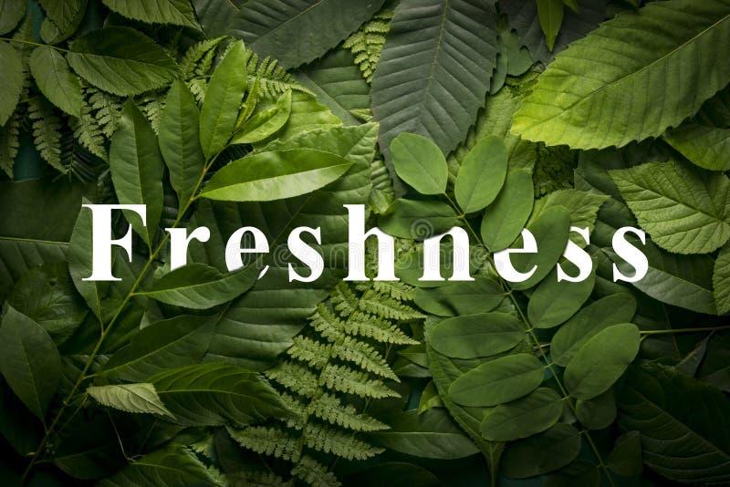 Naturligt friskhetbegrepp av lös grön djungellövverk royaltyfri bild