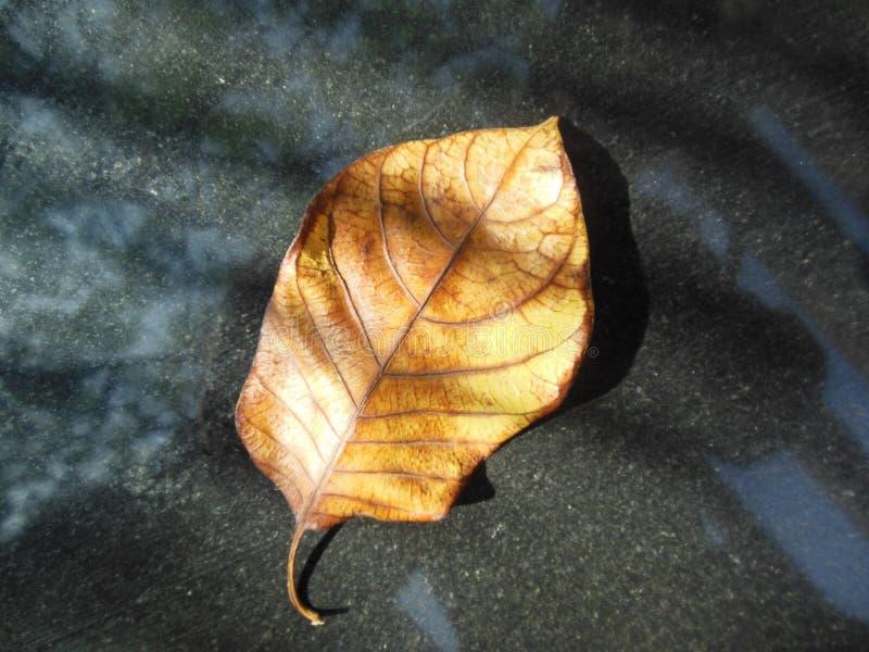 Naturligt guld- lövrikt arkivfoto