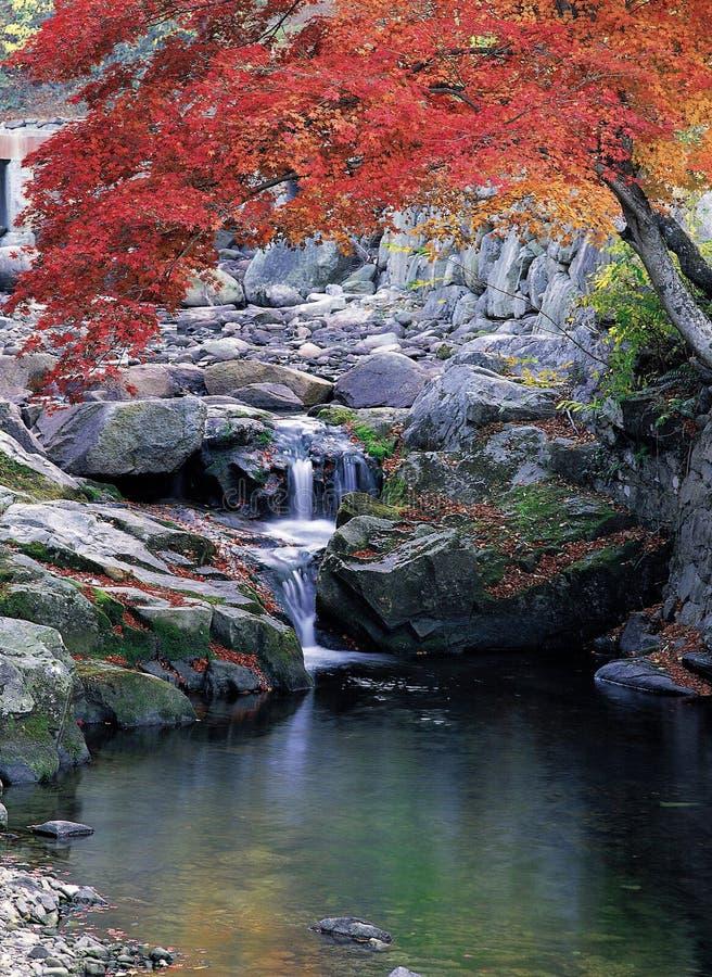 naturligt landskap arkivfoto