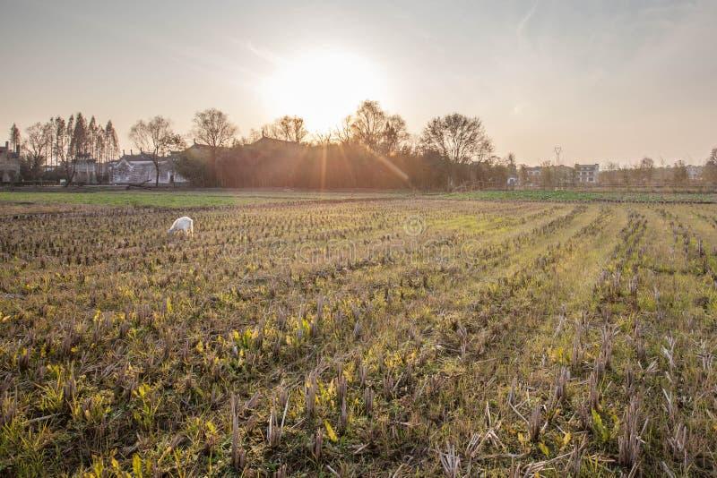 Naturligt landskap för Anhui hong cun fotografering för bildbyråer