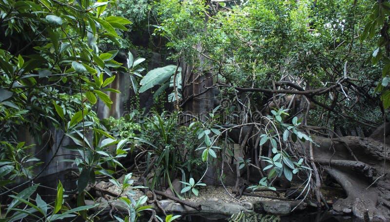 Naturligt landskap för sommar i rainforesten arkivbilder