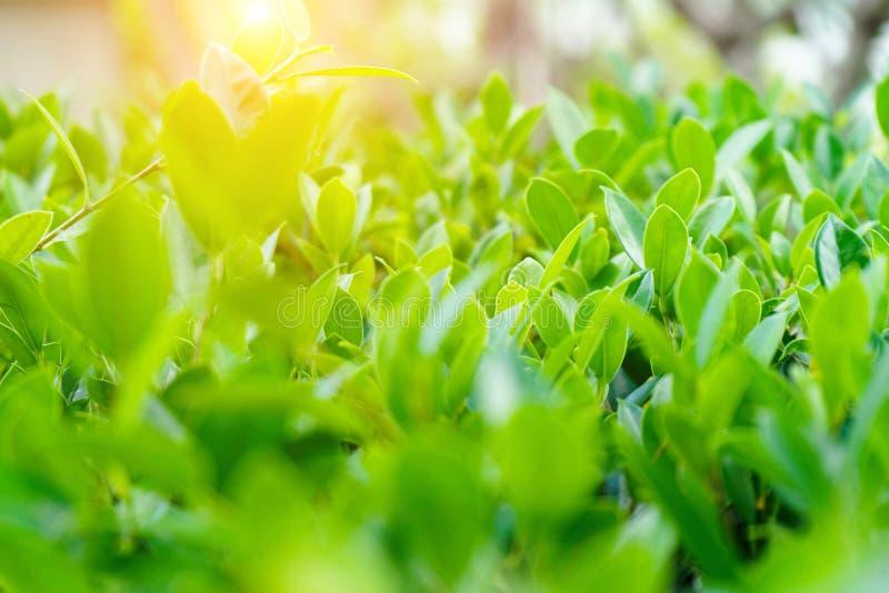 Naturligt landskap f?r gr?na v?xter genom att anv?nda som en bakgrund royaltyfri fotografi