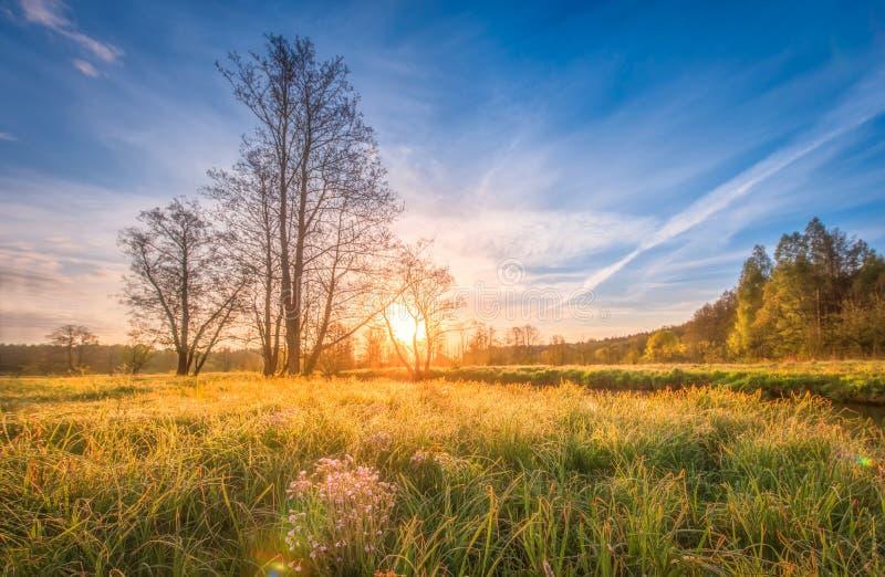Naturligt landskaplandskap på äng på ljus soluppgång på vårmorgon Fjädra gräs, träd och blå himmel över horisont fotografering för bildbyråer