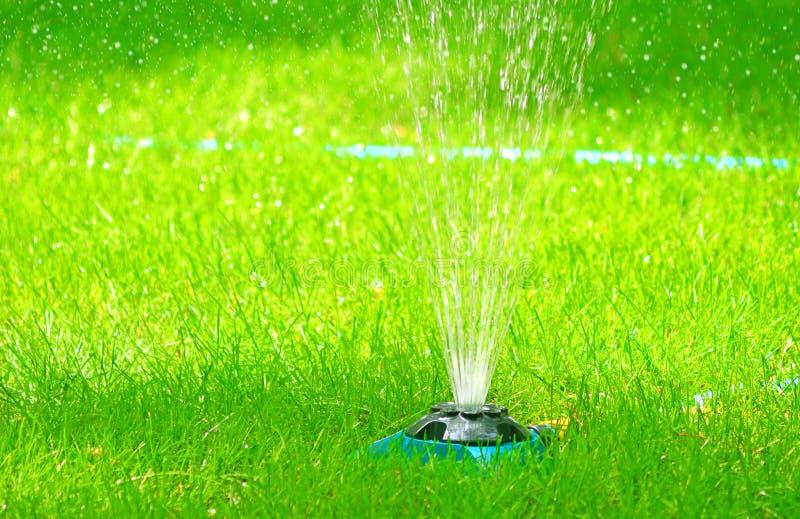 Naturligt nytt bevattna för grönt gräs Sommargräsmatta royaltyfria foton