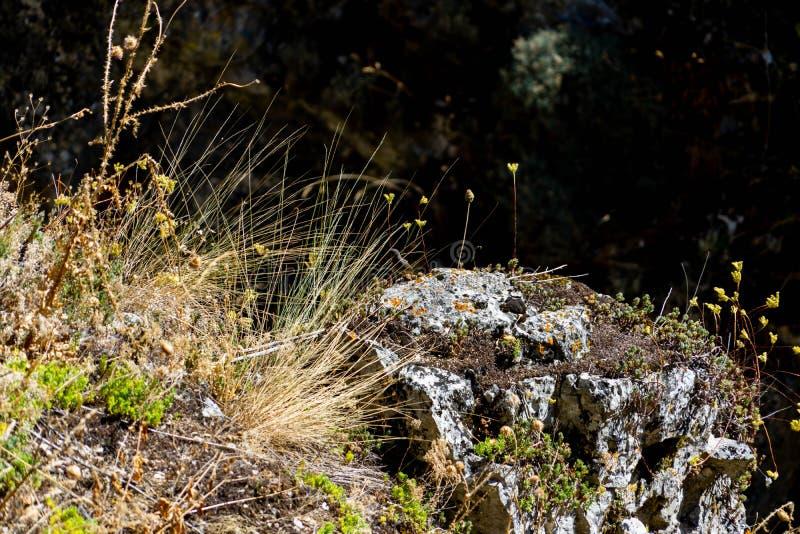 Naturligt parkera av Yeclaen, fotografering för bildbyråer
