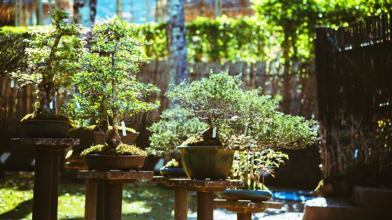 Naturligt parkera bonsaitr?det I parkera royaltyfri foto