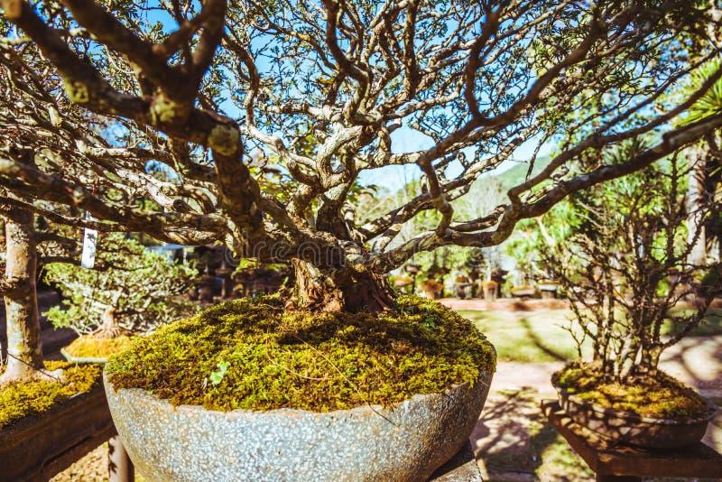 Naturligt parkera bonsaitr?det I parkera royaltyfria foton