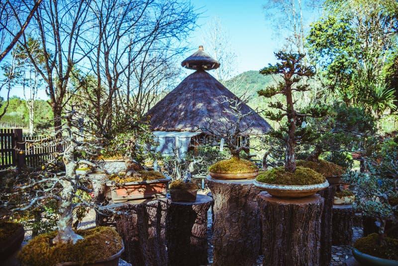 Naturligt parkera bonsaitr?det I parkera arkivbilder