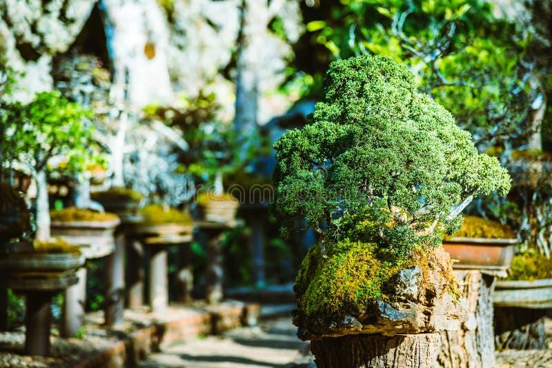 Naturligt parkera bonsaitr?det I parkera arkivfoto