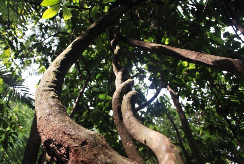 naturligt regn för krullningsskog royaltyfri fotografi