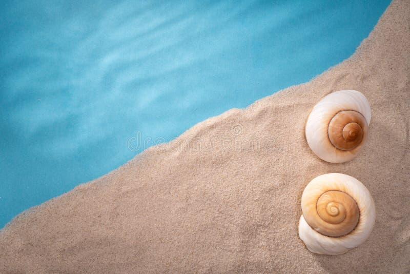 Naturligt Seashell, säkert boende för marint liv arkivbilder