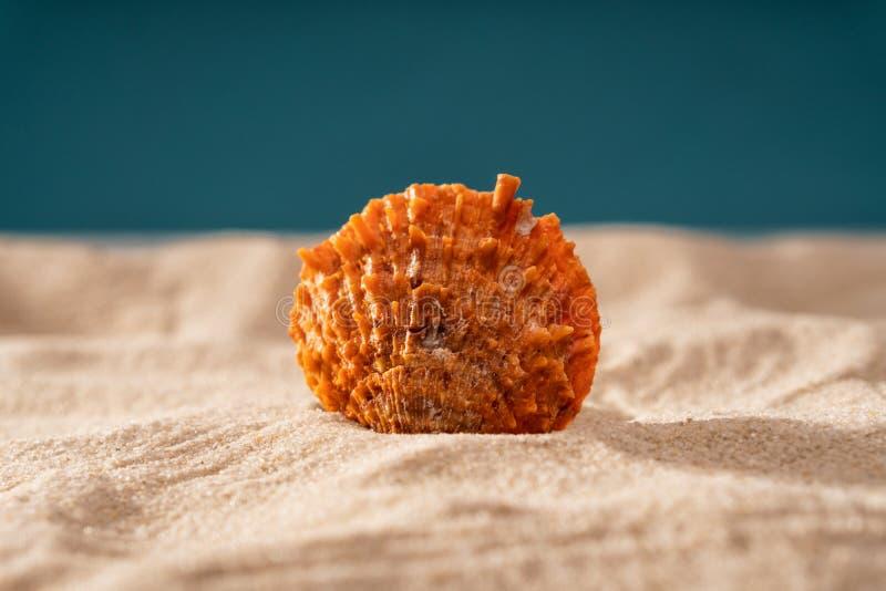 Naturligt Seashell, säkert boende för marint liv arkivfoton