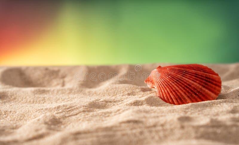 Naturligt Seashell, säkert boende för marint liv arkivfoto