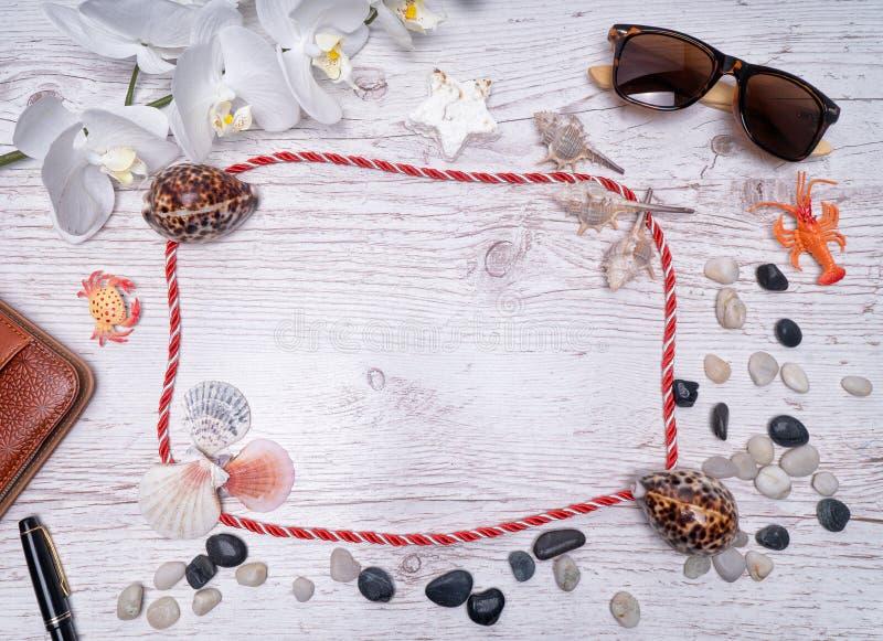 Naturligt Seashell, säkert boende för marint liv royaltyfri foto