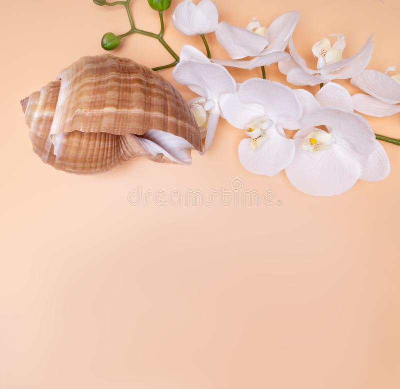 Naturligt Seashell, säkert boende för marint liv fotografering för bildbyråer