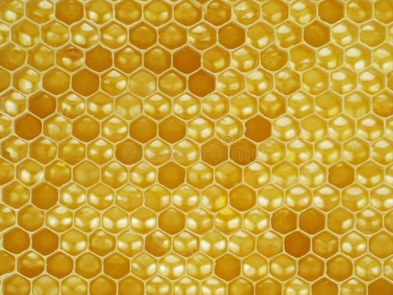 Naturligt seende makroskott, slut upp av en honungskaka arkivbild